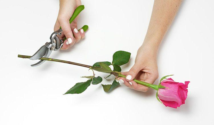 Tăierea tulpinilor florilor