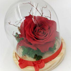 Trandafir criogenat in cupola Uca135L – cupola H14cm, trandafir criogenat L, aranjament licheni stabilizati